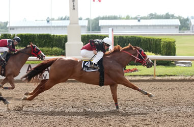 Congratulations to Wincikaby, Richard and DK Training FIRST DOWN THE TRACK with jockey Brian Bell for winning the 2016 Picov Maturity .