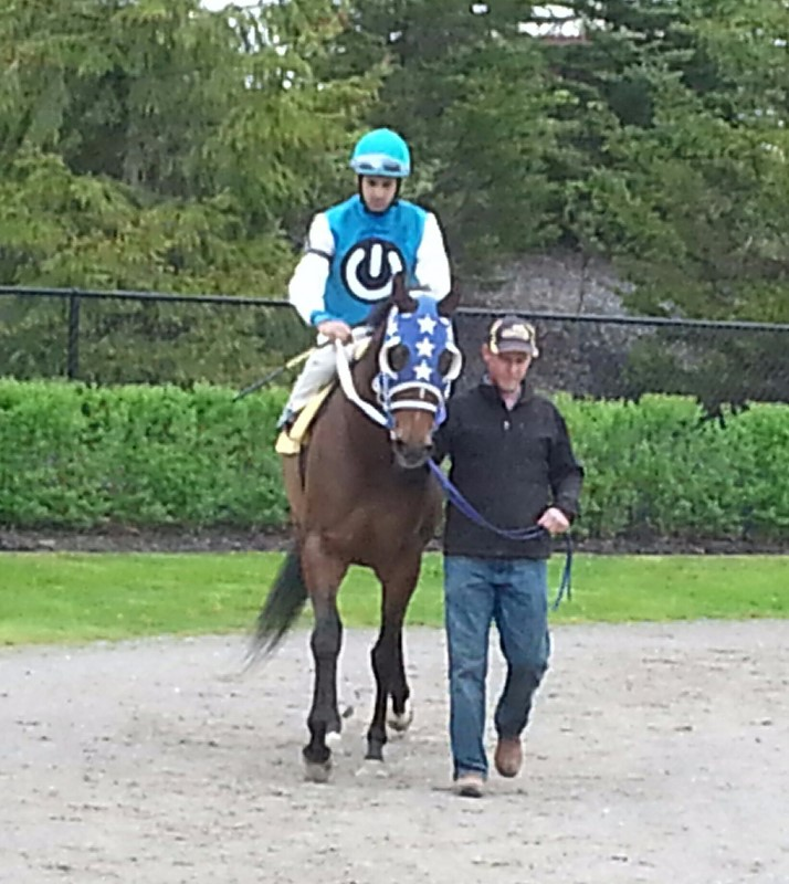 Georgies May Kitty and owner Kim Mark's intriguing racing silks