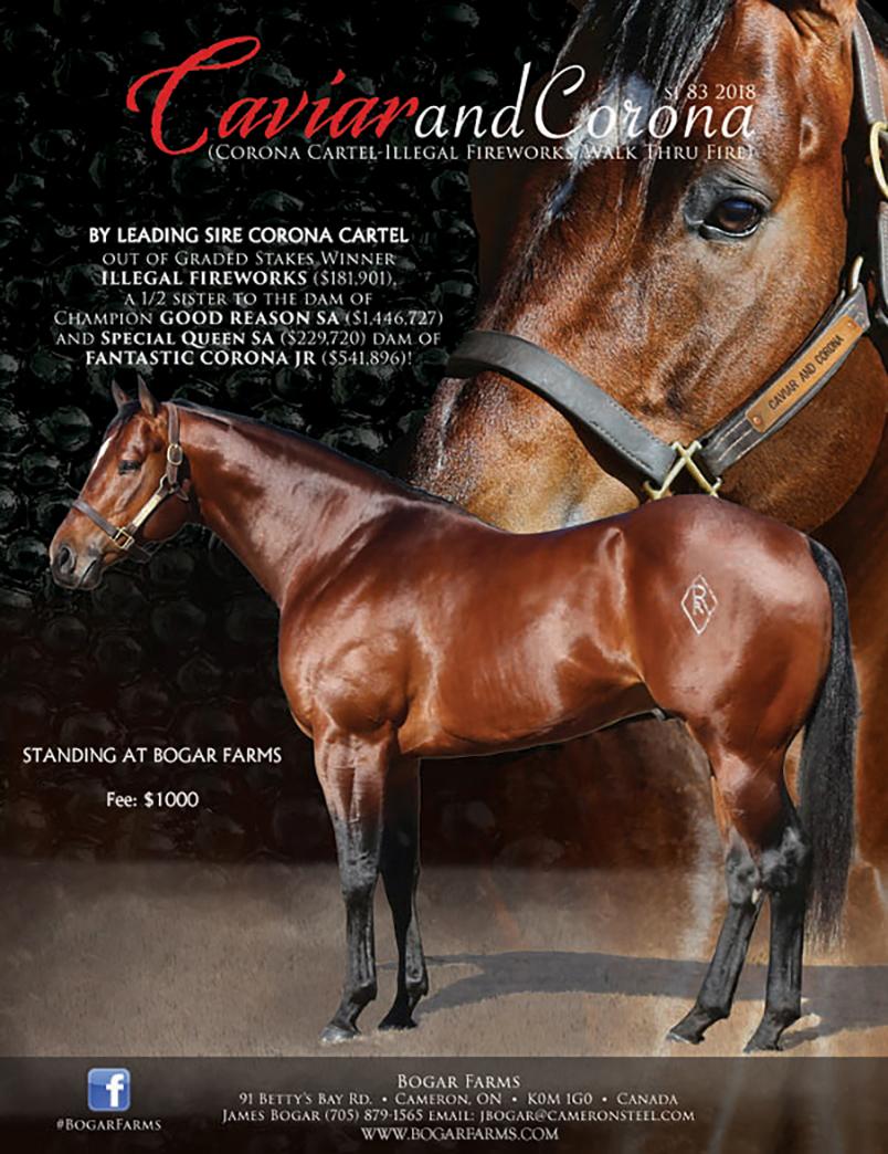 Bogar 2020 Stallions