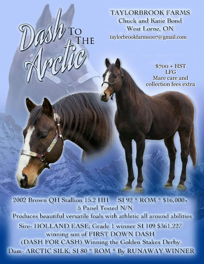 Dash to the artic - Horse Stallions QROOI