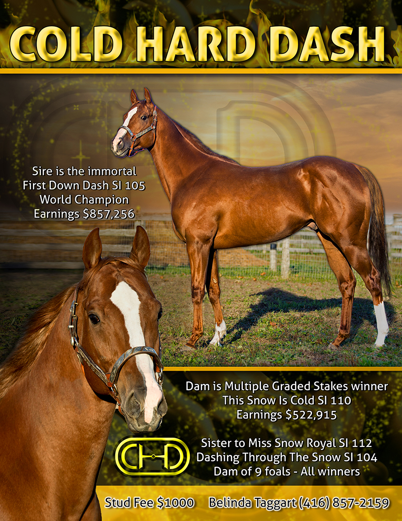 COLD HARD DASH - QROOI Stallions for sale