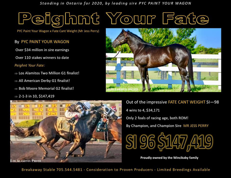 Peighnt Your Fate Stallion Ads QROOI