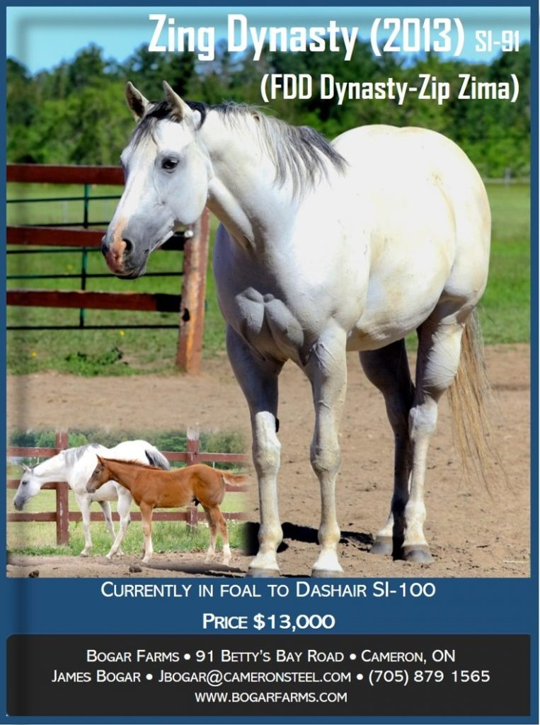 Zing Dynasty 2013 Horse for Sale